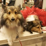 Bergdorf Goodman's Puppy Fashion show at Fashion's Night Out, 2011