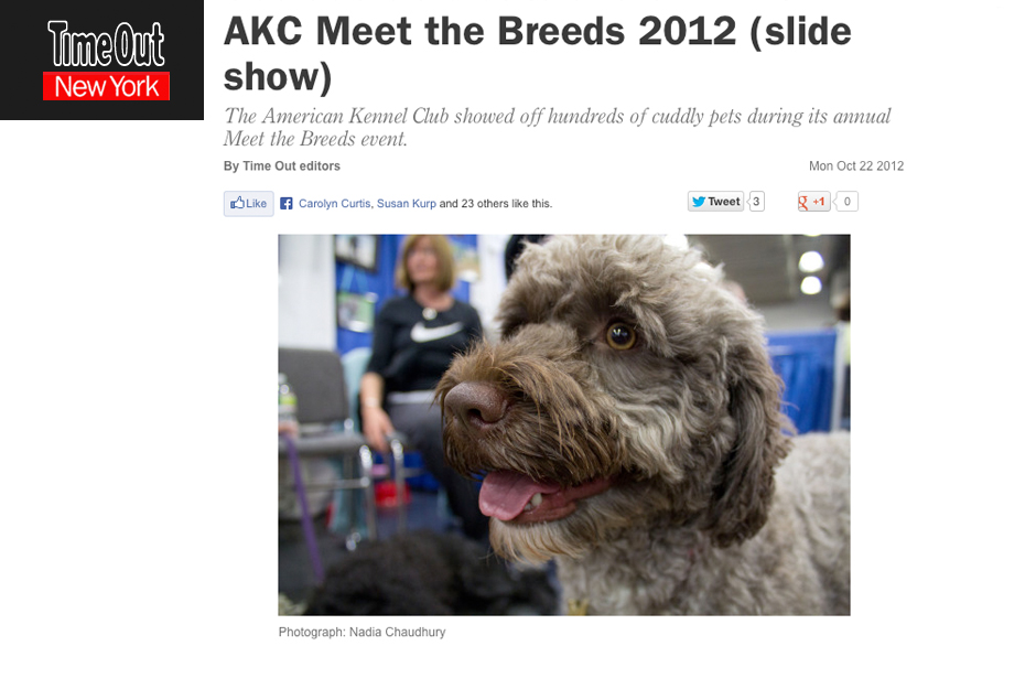 Time Out New York: See adorable cats and dogs from AKC Meet the Breeds 2012